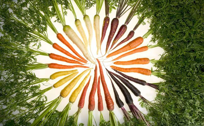 many carrots with green placed in a circle, vegetarian weight loss