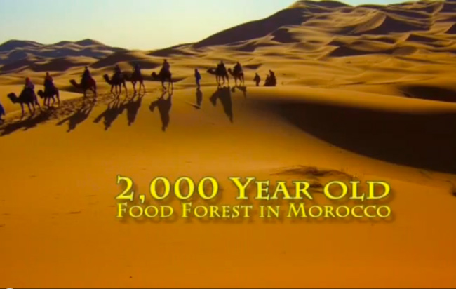 morocco, food forest