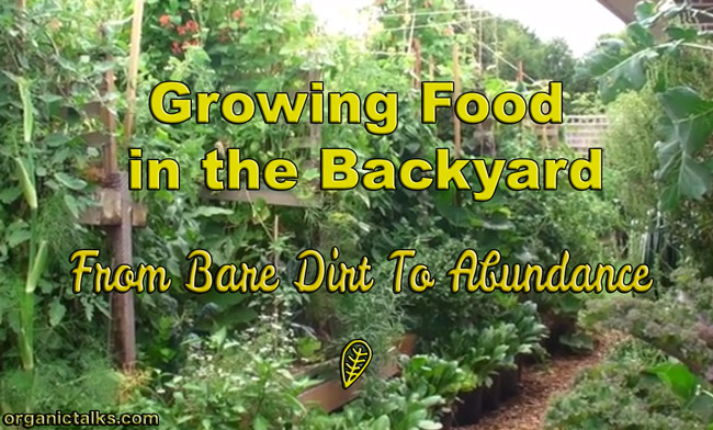 backyard vegetable garden