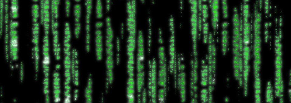5 Tips for Thriving in 'The Matrix'