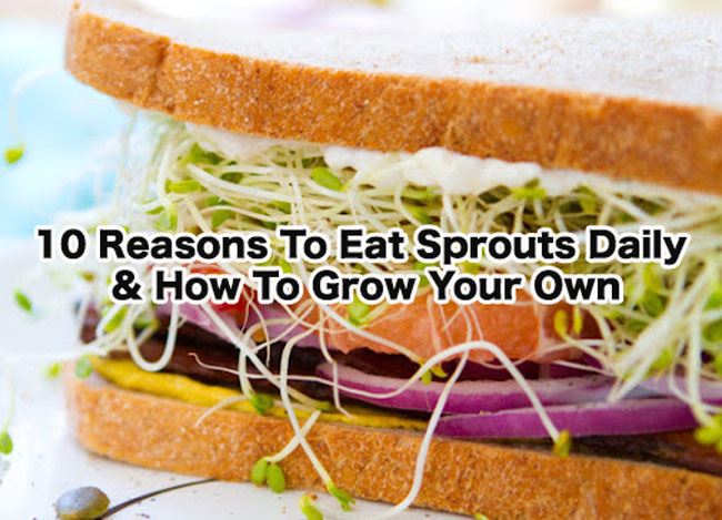 Reasons To Eat Sprouts