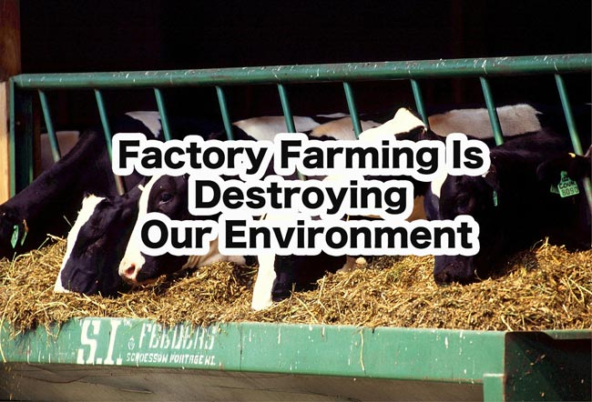 Farming Is Destroying Our Environment