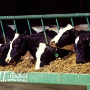 Factory Farming Is Destroying Our Environment