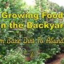From Bare Dirt To Abundance – A Year In The Life Of a Vegetable Garden