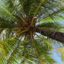 Shocking Agricultural Crisis Looms For One of The World's Largest Coconut Producers Thanks To The Chemical Industry