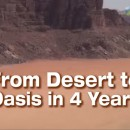From Desert to Oasis in 4 Years
